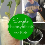 TheInspiredHome.org // Simple Photosynthesis Activities for Kids