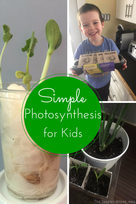 photosythesis experiments for kids Name: _____ a tree is like a hungry kid by mikki sadil 1 what substance does a tree use for food a photosynthesis b.