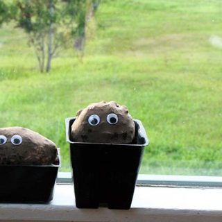 DIY Kid's Garden for Your Windowsill
