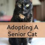 TheInspiredHome.org // Adopting A Senior Cat