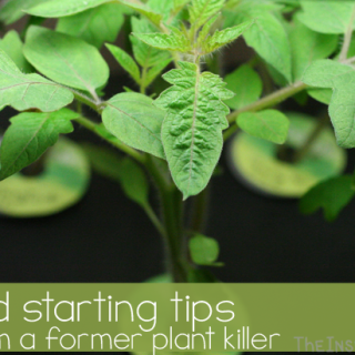6 Tips to Seed Starting from a Former Plant Killer