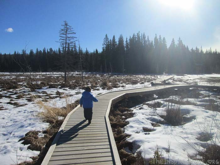 Get Outside Mini Hike with Kids, Beaver Board Walk