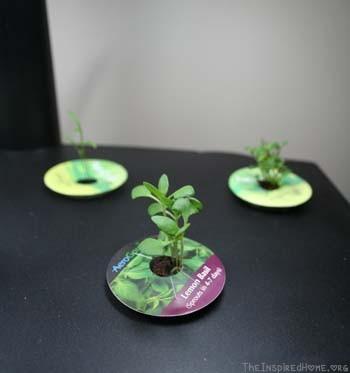 5 Tips for Seed Starting // AeroGarden starting