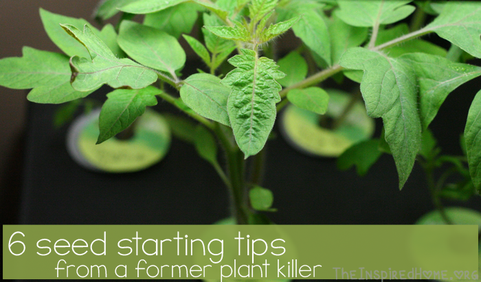 TheInspiredHome.org // 6 Seed Starting Tips From a Former Plant Killer