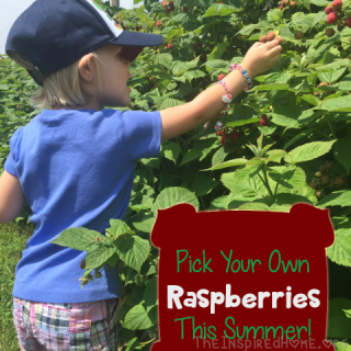 Get Outside and Pick Your Own Fruit!