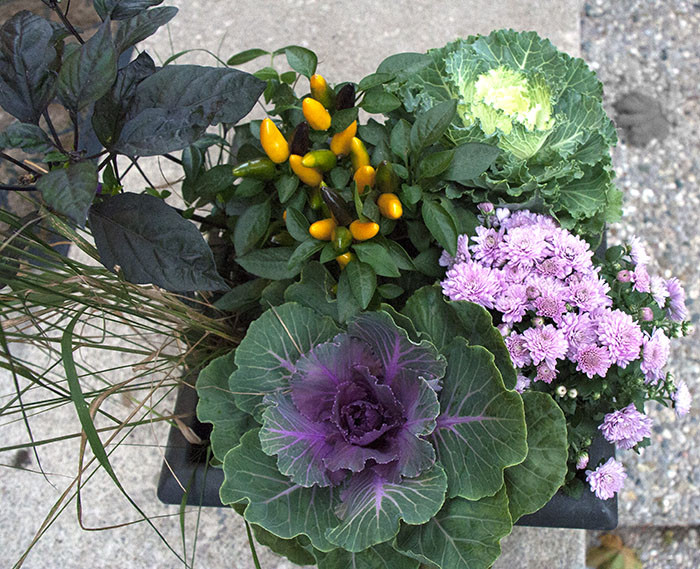DIY Fall Planter Plants