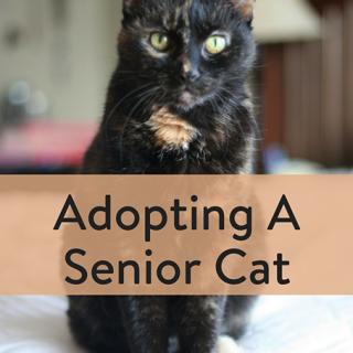 Adopting A Senior Cat