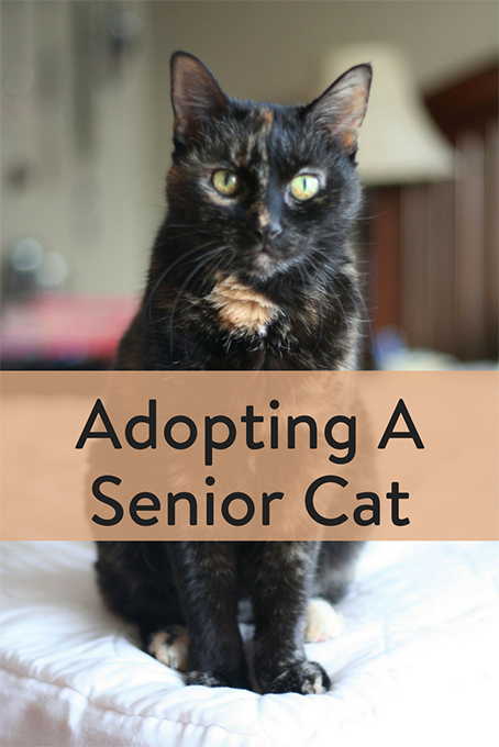 TheInspiredHome.org // Adopting A Senior Cat